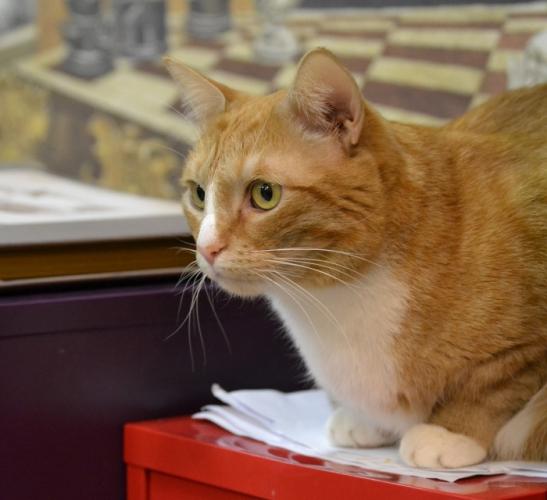 Рыжий кот посещает лекции в университете и иногда засыпает на партах. Студенты считают его своим талисманом