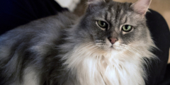 Хозяйка спокойно отпускала кошку гулять, пока та не явилась с запиской. Ох и хитрюга эта домашняя любимица!