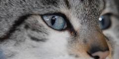 (Видео) Кошка каждый вечер общалась с хозяином по видео. Однажды он не позвонил