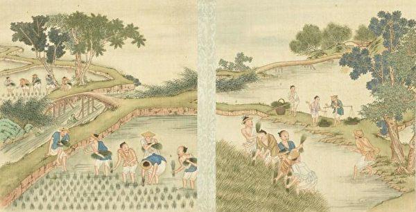 «Картина сельской идиллии. Выращивание риса»