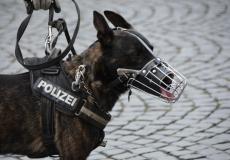 10-летний мальчик посмотрел шоу о полицейских собаках и собрал $315000 на бронежилеты для них