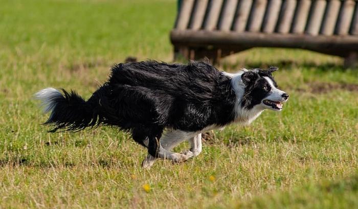 (Видео) Встреча пса с хозяином после долгой разлуки получилась забавной. Четвероногие умеют преподносить сюрпризы!