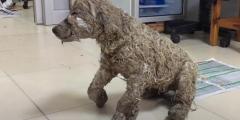(Видео) Дети облили щенка клеем и бросили умирать. Но в мире есть добрые люди
