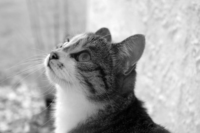 (Фото) Грязной и блохастой бездомной кошке повезло. Её роскошные глаза поразили случайную прохожую в самое сердце