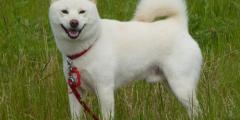 (Фото) Собака, которая любит быть «не как все», повеселила народ своими выходками