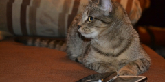 (Фото) Кот сделал потрясающие селфи. Такой ракурс под силу лишь профессионалам!