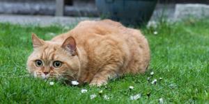 (Фото) Кот потрясён до глубины души: хозяйка рассыпала его корм!
