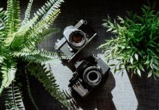 (Видео) «Тайную» жизнь растений снимали на камеру целый день. Видео получилось жутковатым!
