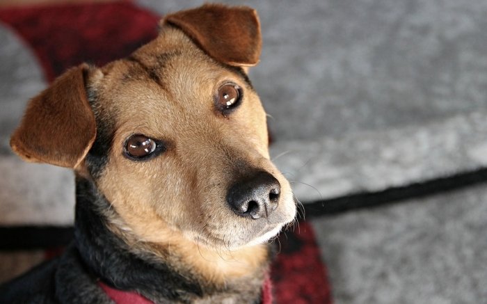 Владелец пса в шутку выдвинул его на выборы. А избирателям понравилась собачья программа, и они поддерживают кандидата