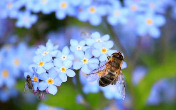 Пчёлы спасли жизнь благодетеля и наказали убийцу. Око за око, как говорится