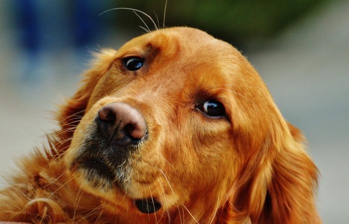 (Видео) Студентка переехала в общежитие и оставила любимого пса. Равнодушно смотреть на грустную собаку не получается
