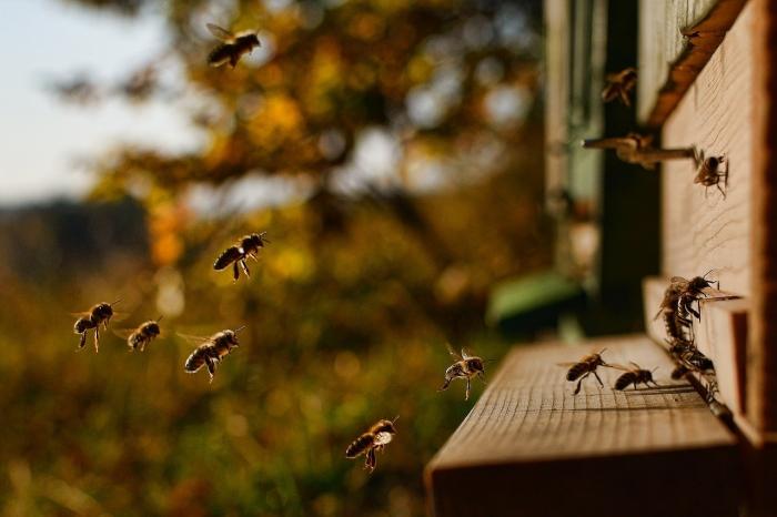 Пчёлы летят в улей