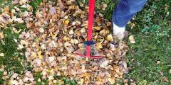 (Фото) Послание из листьев составил дворник для жителей домов. И оно ― в самую точку!