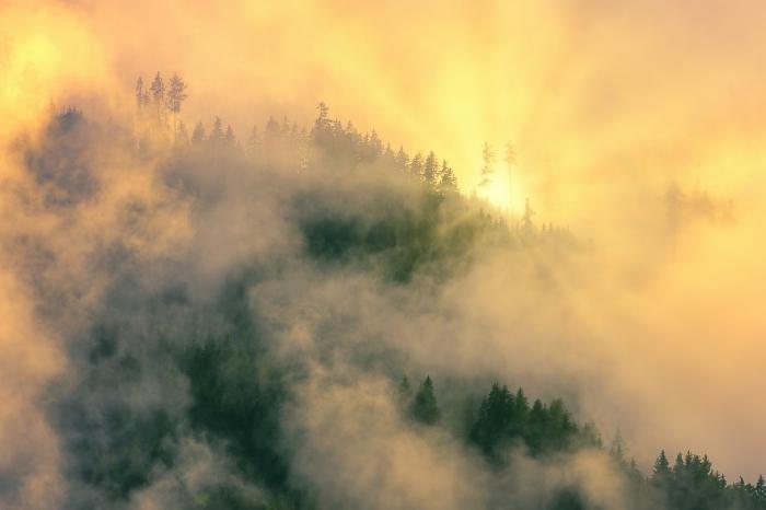 восход над лесом
