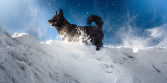 (Видео) Выгулять собаку — это как отправиться в экспедицию! Суровые условия проживания на островеШпицберген