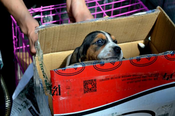 Собачья история про Золушку, не иначе! Слепая собака из московского приюта обрела дом в Швейцарии