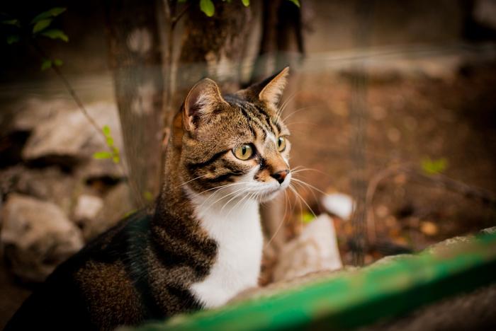 Кот-воришка приносит домой всякие вкусности. При этом вид у животного самый невинный!