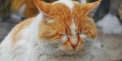 Замёрзший кот в отчаянии «постучался» в двери дома. И он не ошибся адресом