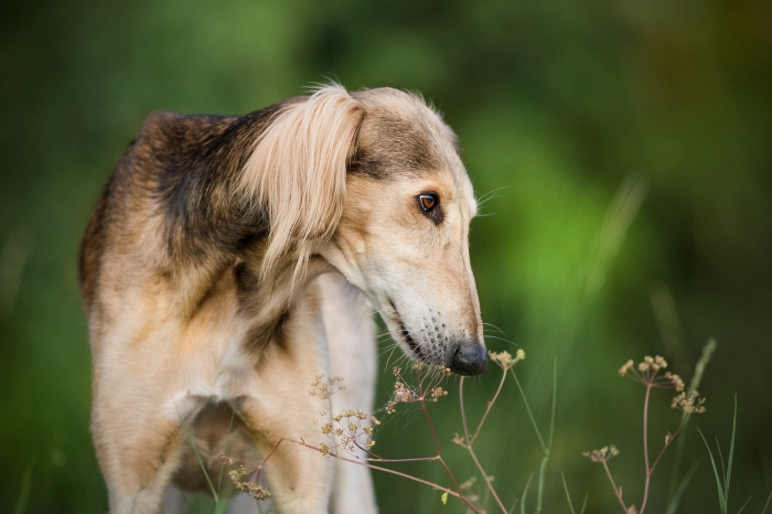 (Фото) Эта собака поражает нестандартным обликом. Кажется, что в её роду были жирафы