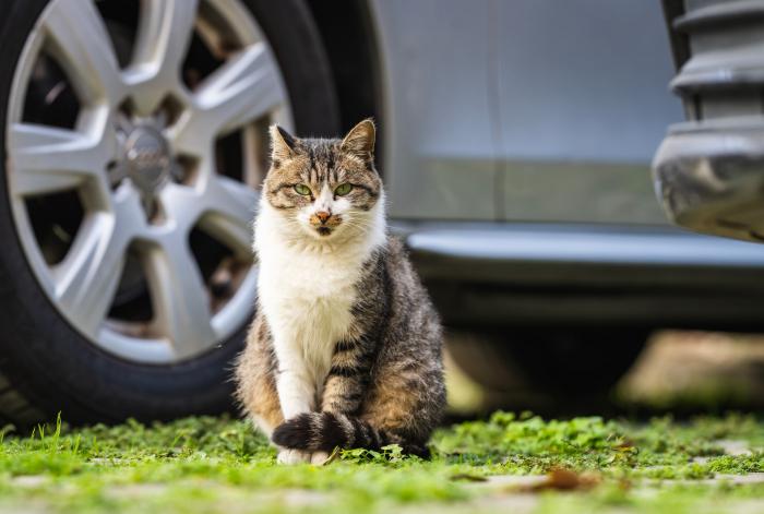 Наглая кошка + растерянный полицейский = ну очень милое зрелище!