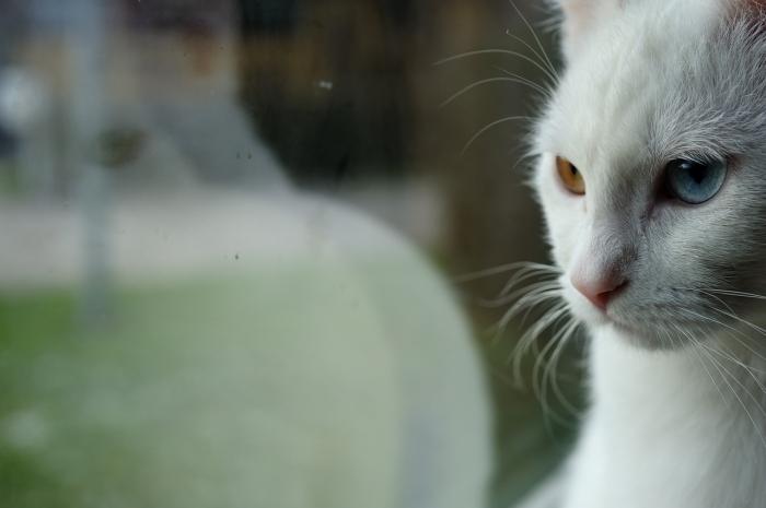 (Видео) Женщина жутко перепугалась, когда увидела, что за соседским котом следует призрак
