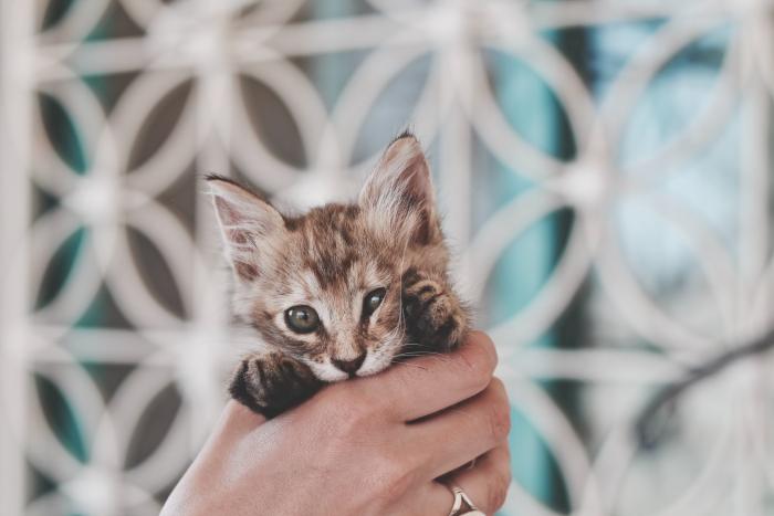 Мама-кошка принесла котёнка в реанимацию больницы. Врачам пришлось его обследовать