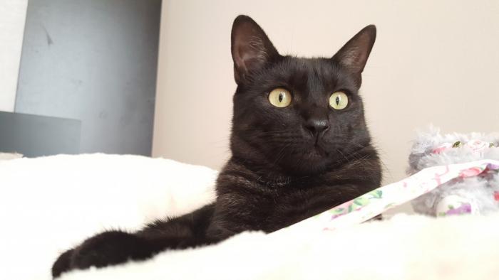 (Видео) Хозяин застал свою кошку за жутким занятием. Теперь он принимает меры предосторожности