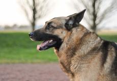 (Видео) Служебный пёс на пенсии «расплакался» при встрече со своим куратором-милиционером. Ведь они не виделись 1,5 года