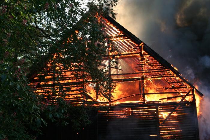 Бездомный вывел из огня 16 животных. А ведь даже пожарные боялись к ним подходить