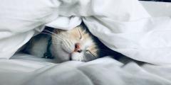 (Видео) Каждое утро коты оказывались рядом с хозяйкой, невзирая на закрытые двери. Паранойя или телепортация?