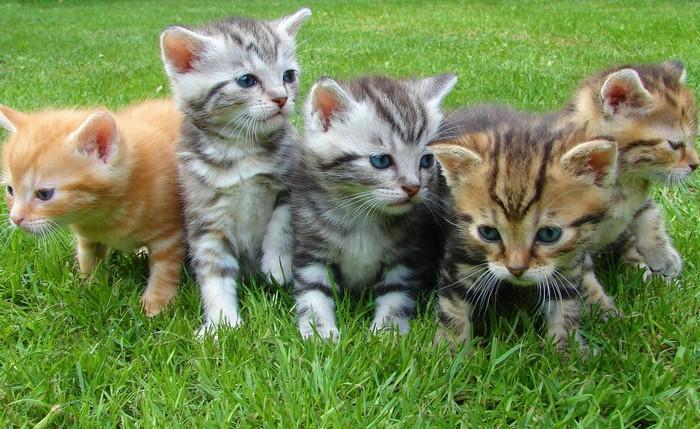 (Фото) 5 кошек в доме способны кого угодно умурлыкать и успокоить в период пандемии. Какие же они красавицы!