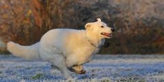 (Видео) Пёс бежал за «скорой» до самой больницы, а потом неделю ждал хозяина у двери
