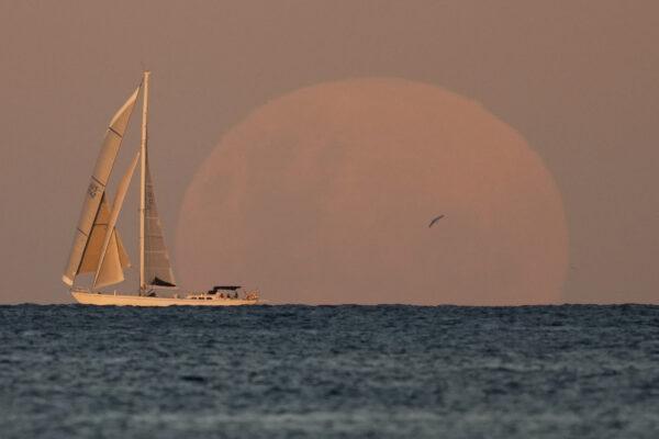 Яхта проплывает под восходом луны в Сиднее, 26 мая 2021 года.