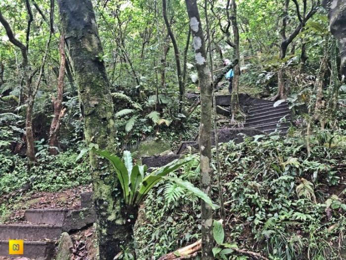 Крутая туристическая тропа с 1706 ступенями ведёт к самой высокой вершине Черепашьего острова.