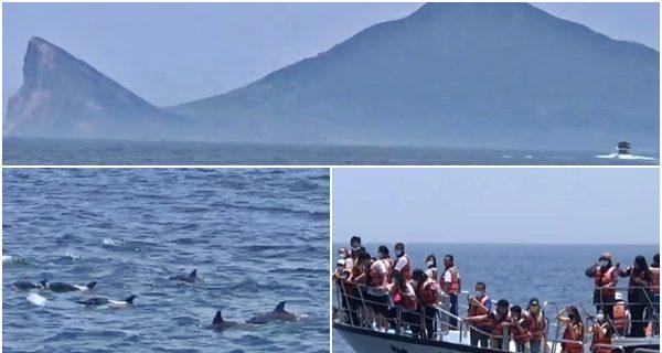 Черепашьего острова можно увидеть 17 видов дельфинов и китов.