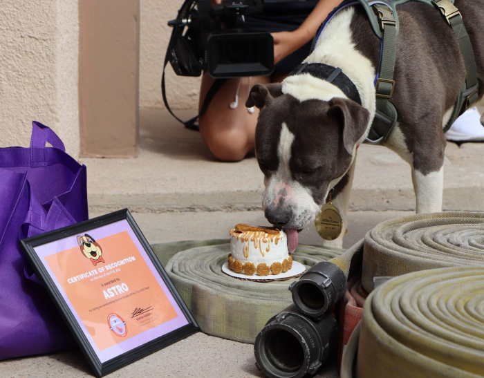 Собака получила награду за спасение жизни своего хозяина