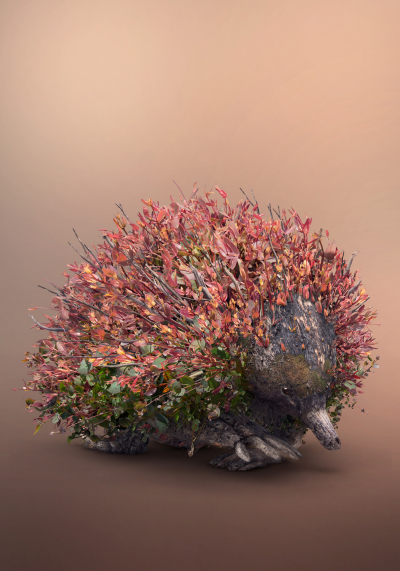 Фотограф делает портреты живой природы из множества снимков