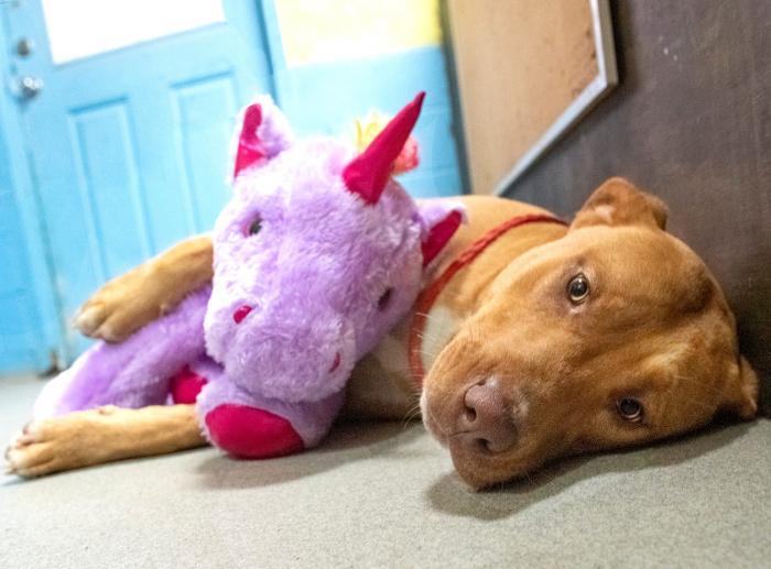 Бездомный пёс пытался украсть игрушку