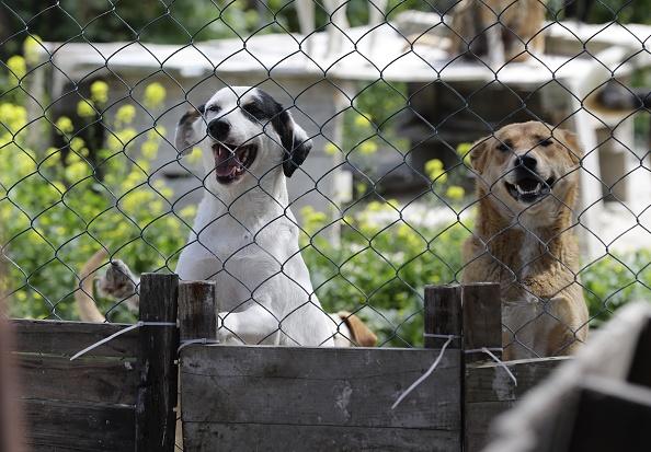 Женщина взяла из приюта собаку, которая растопила её печаль