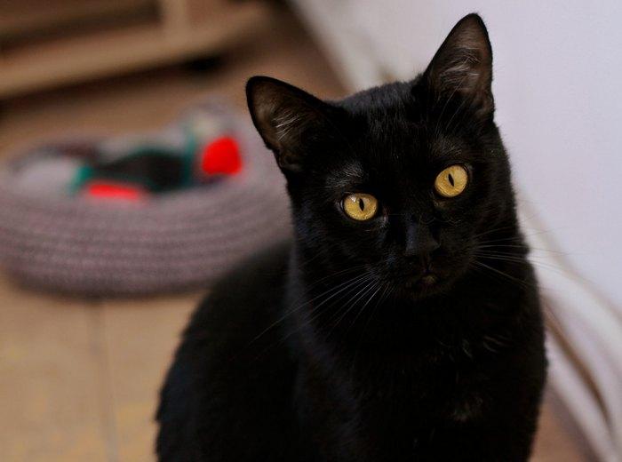 Кот ловко открыл дверь на балкон и выпустил запертую хозяйку