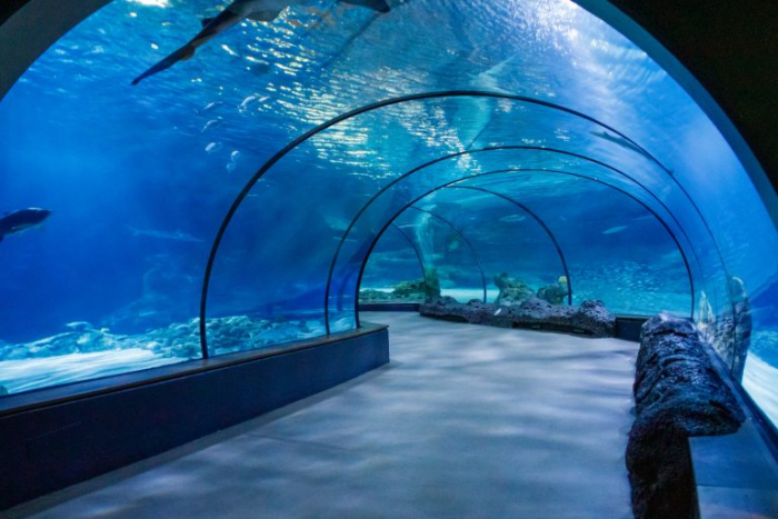 аквариум, Менеджер, вода, рыба