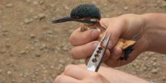 ВСочи местный доктор Айболит бесплатно лечит раненых птиц