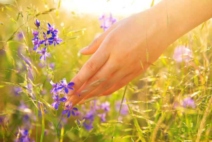 Полевые цветы способствуют процветанию местной популяции насекомых.