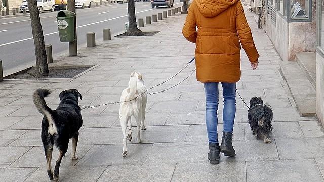 Пропавшую в Париже собаку нашли в 900 километрах от дома