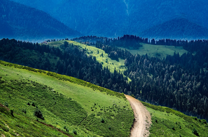 Оцифровку российского леса начали с Забайкалья