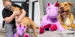 Бездомный пёс пытался украсть игрушку… и попал в «заключение» за мелкую кражу