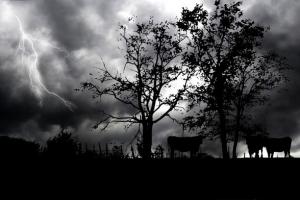 Пять громов: Бог не потерпит злого сердца