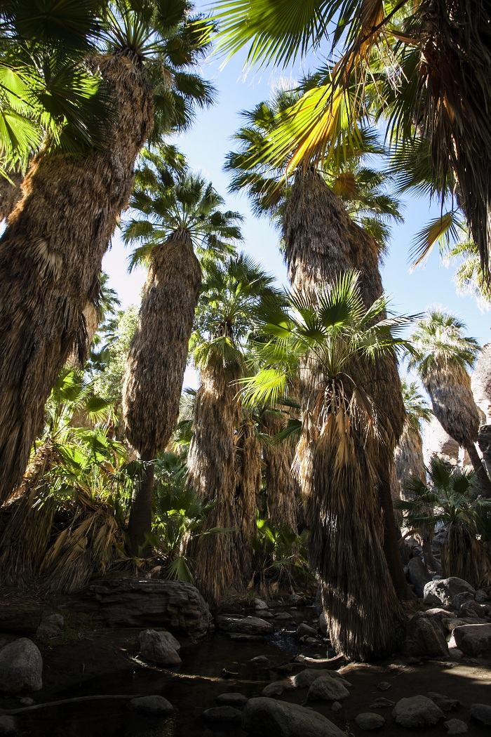 20161021 PalmSprings ChannalyPhilipp IMG 2153 1 - Очарование пустыни: выходные в Палм-Спрингс