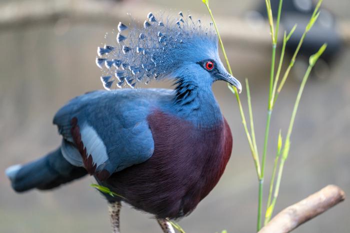 Шесть самых красивых голубей в мире: их надо увидеть, чтобы поверить в это