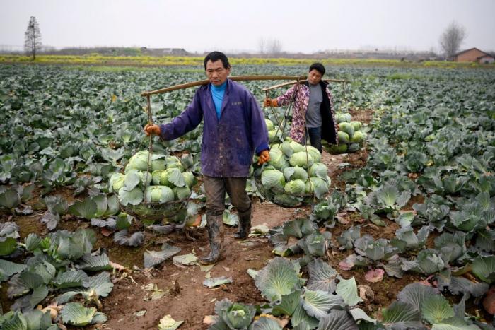 Бедность в Китае: «Чудо» Си Цзиньпина оказалось ложью